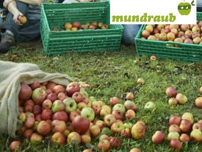 Jetzt gratis Obst sichern