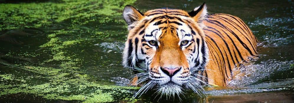 Günstig in den Tierpark Berlin geht es dank Rabattaktionen