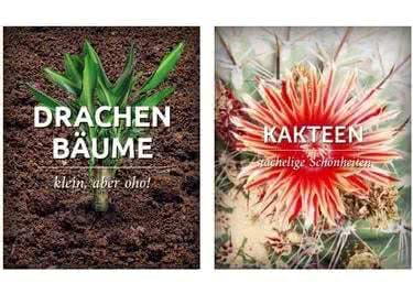 Ob Drachenbaum oder blühende Kakteen - Mit den Pflanzen von Palmenmann wird dein Zuhause zum Paradies