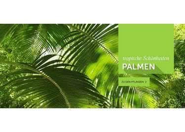 Bette dich unter einer üppigen Palme - Bei dir Daheim!!!