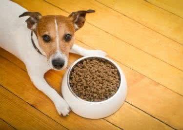 Hundefutter zum kleinen Preis, dank Tackenberg-Gutschein