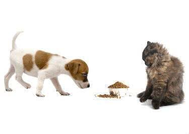 Ein Hund und eine Katze nähern sich einem Futternapf.