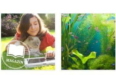 Das Gratis-Magazin von ZooRoyal gibt dir hilfreiche Tipps für deinen Vierbeiner