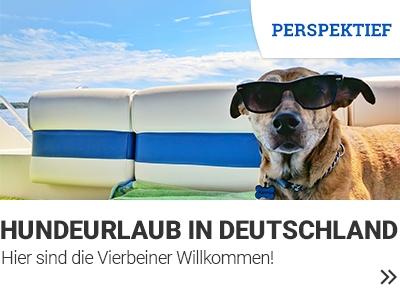 Hundeurlaub banner