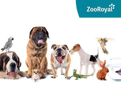Staffel-Rabatt bei ZooRoyal: Spart jetzt bis zu 10€ auf alles!