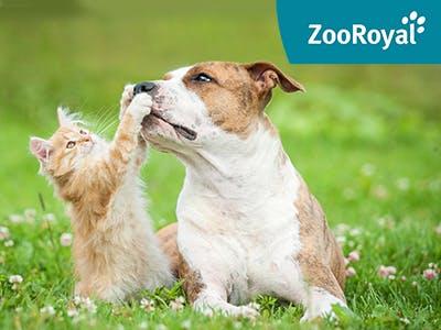 Nur kurz: Spart jetzt bis zu 8€ auf alles bei ZooRoyal