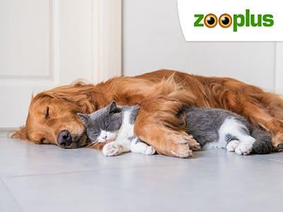 Ein Traum: Spare jetzt 5€ auf Hunde- und Katzenbetten bei Zooplus