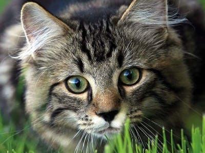 Katzenfutterprobe von Bozita gratis bestellen