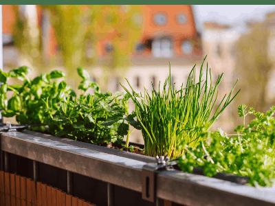 Gratis Gartenkräuter-Samen mit dem hr